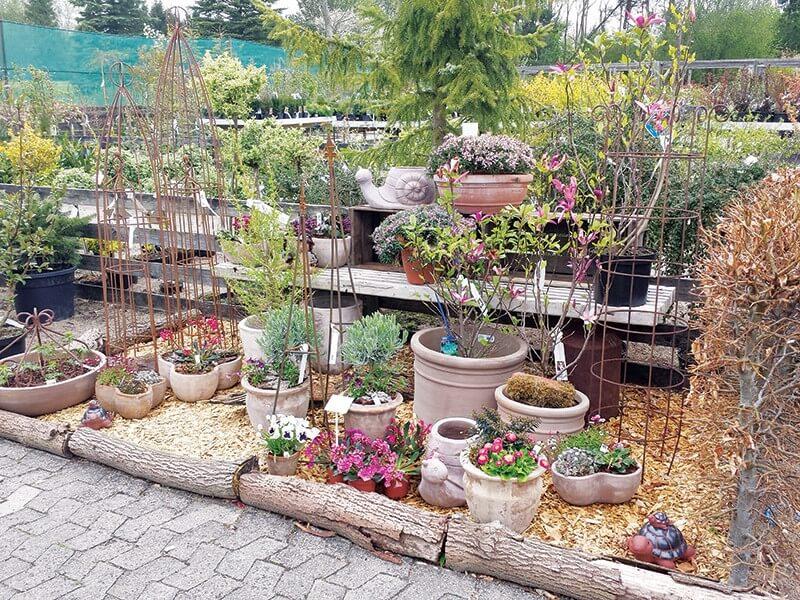 Forskellige blomster i et havecenter i Aaabenraa