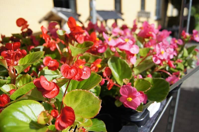 Blomster fra et havecenter i Aabenraa