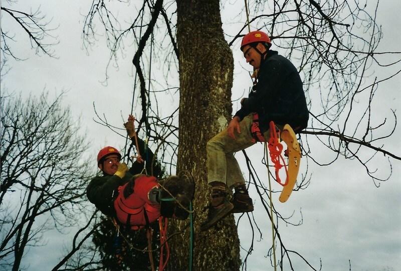 To anlægsgartnere i Sønderborg, der saver grene af et træ